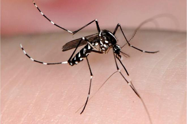 mosquito_tigre noticias ok